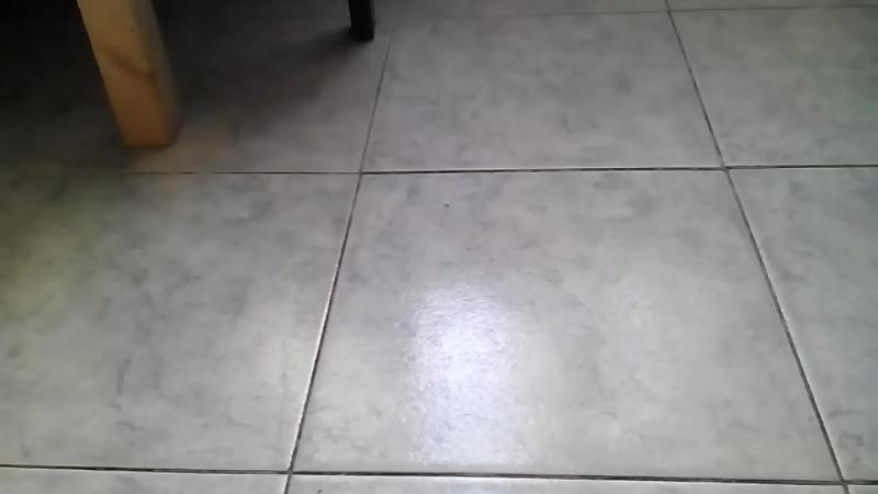 Котёнок играется ))