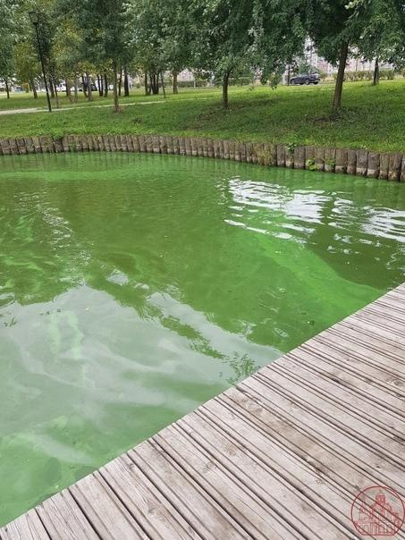 В Бутово что-то произошло с водой, и она окрасилась в зел...