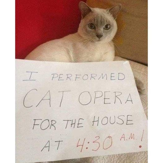Я исполнил кошачью оперу