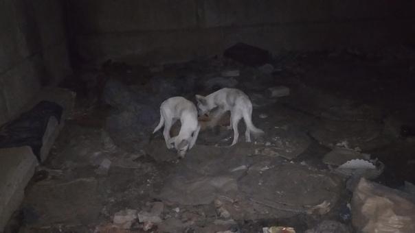 💟КАЙ и ГЕРДА💟Два щенка были найдены на территории ...