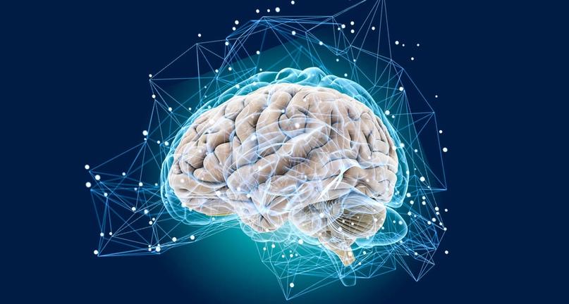 Как время суток и продукты влияют на работу мозга
