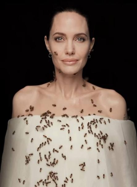 Анна Седакова посмеялась над Анджелиной Джоли: