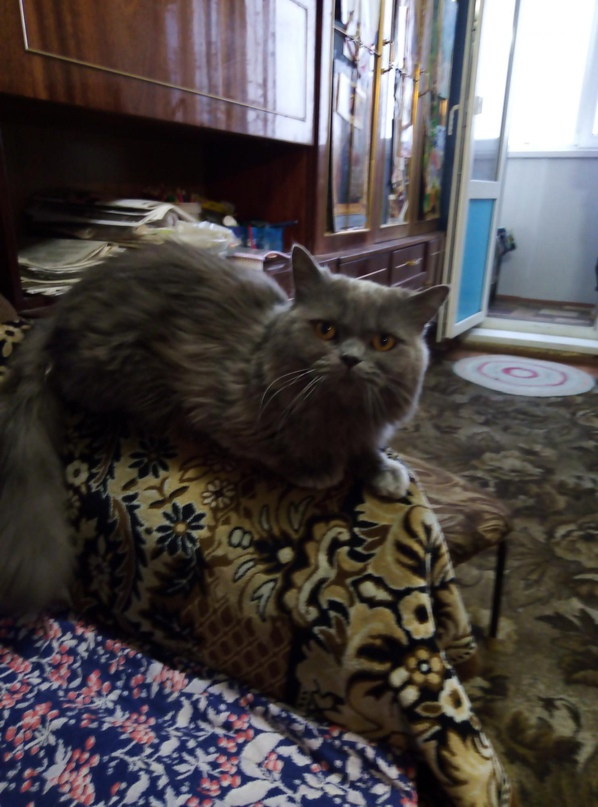 Срочно в связи с переездом отдам кота | Объявления Орска и Новотроицка №20574