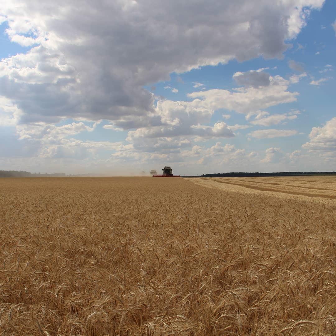 В Петровском районе озимые зерновые культуры скошены аграриями на площади 35 100 га