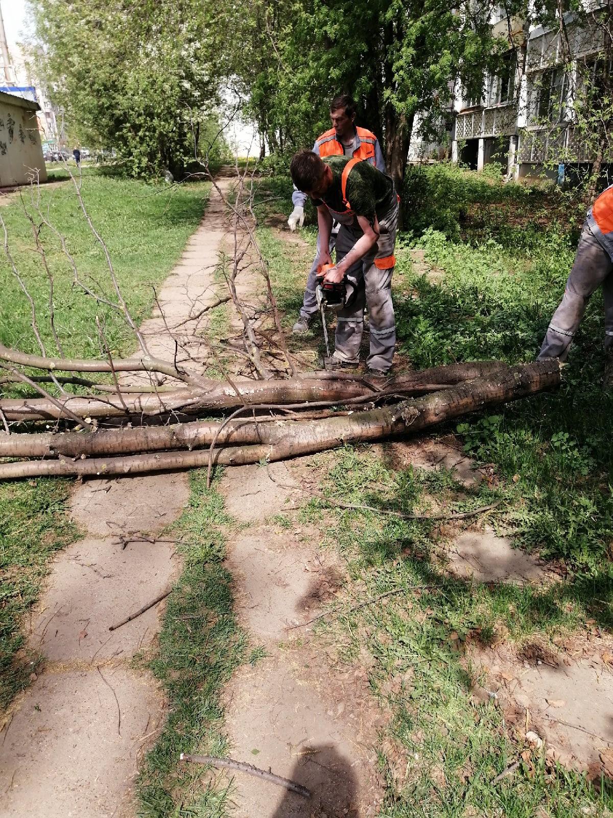 Проспект Строителей 46 спил сухого дерева
