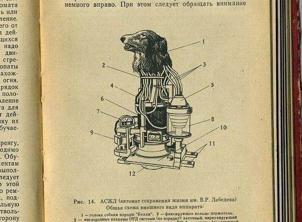 Из рассекреченных архивов... 1958 год. Проект «Колли». Робот-киборг СССР.