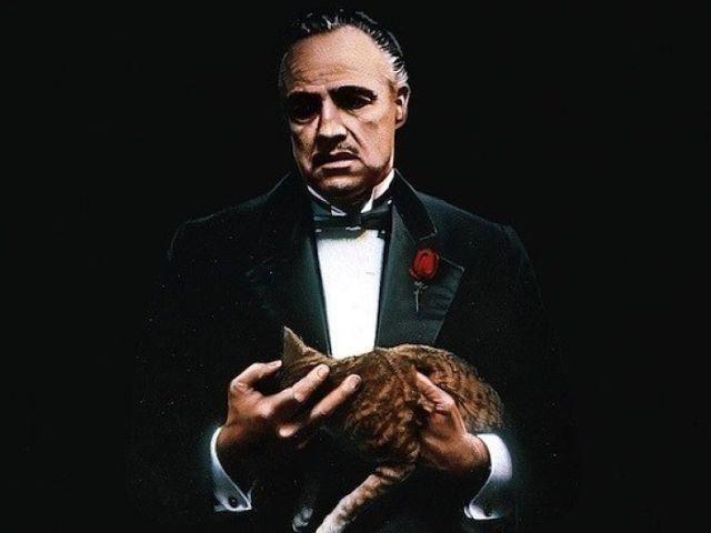 Знаменитая кошка Дона Корлеоне из «Крёстного отца» забрела на съёмочную площадку случайно.