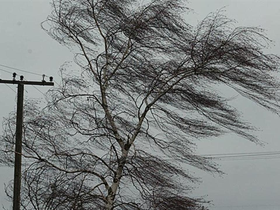 Жителей региона предупреждают об усилении ветра и возможных заморозках