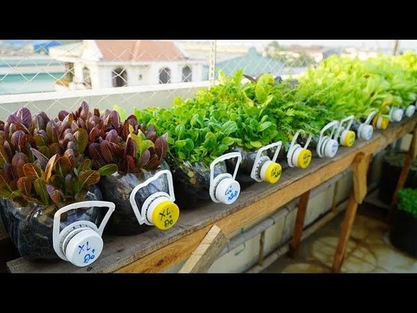 Tái chế hàng loạt chai nhựa,trồng cải ăn non |Recycle series of plastic bottles,grow mustard greens