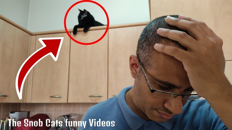 The Snob Cats Funny Videos Cats And Magic Tricks