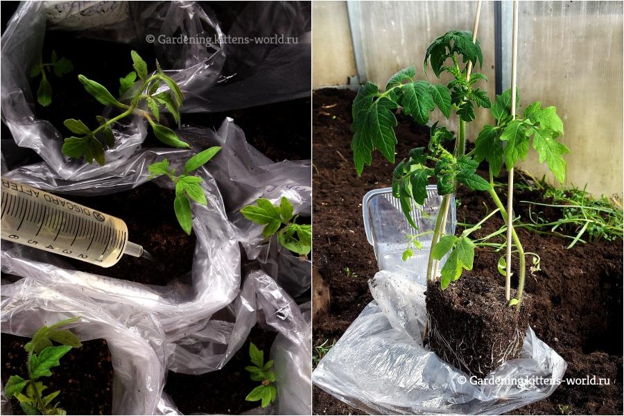 Выращивание рассады без пикировки в полиэтиленовом пакете