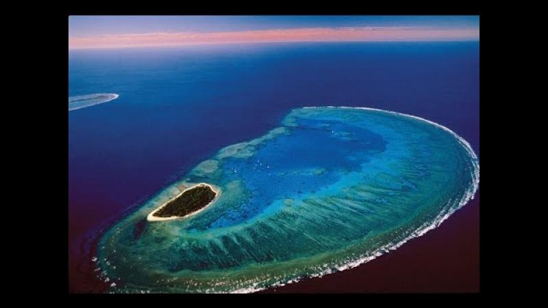Жизнь на Большом Барьерном рифе. Удивительная природа Австралии (3 серия) \ National Ge...
