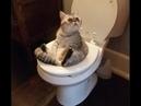 🐈Эти кошки поднимут вам настроение! Подборка приколов с котами и кошками!