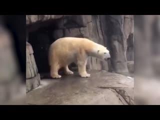 Животные мудрости время танцев