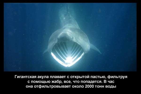валтея - Интересные факты о акулах / Хищники морей.(Видео. Фото) Bb4qmNN5Qq0