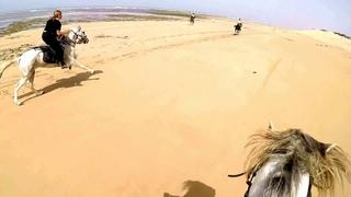 Superbe galop sur la plage, Essaouira, Maroc - La Maison du Cheval