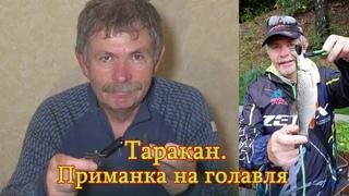 Константин Кузьмин. Таракан на коленке-2.