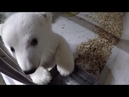 Мими мишка из Берлинского зоопарка