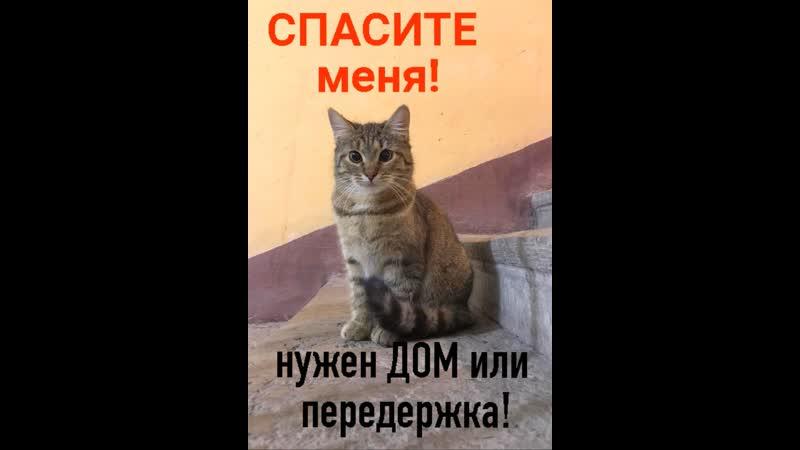 СОС котенок Шпротинка ищет ДОМ или передержку иначе опять улица Петербург