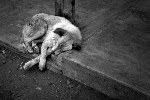 грустные картинки бездомных животных до слез переводе русский язык