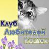 🔷 Клуб Любителей Кошек 🔷