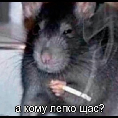 Misha Dmitriev