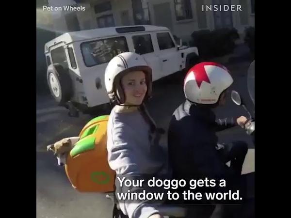 Köpekler için motorsiklette seyahat vakti