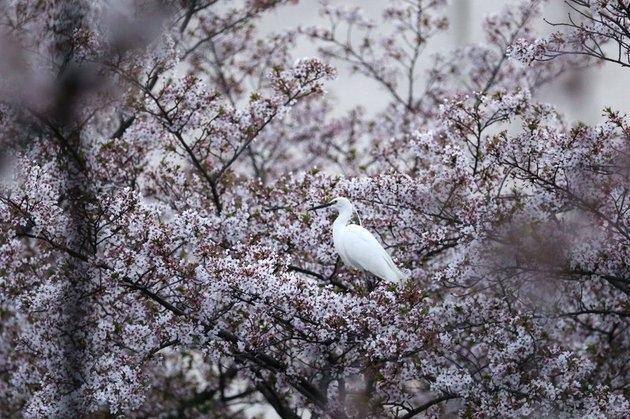 Страна, где все иначе. Япония – для тех, кого нечем удивить, изображение №4
