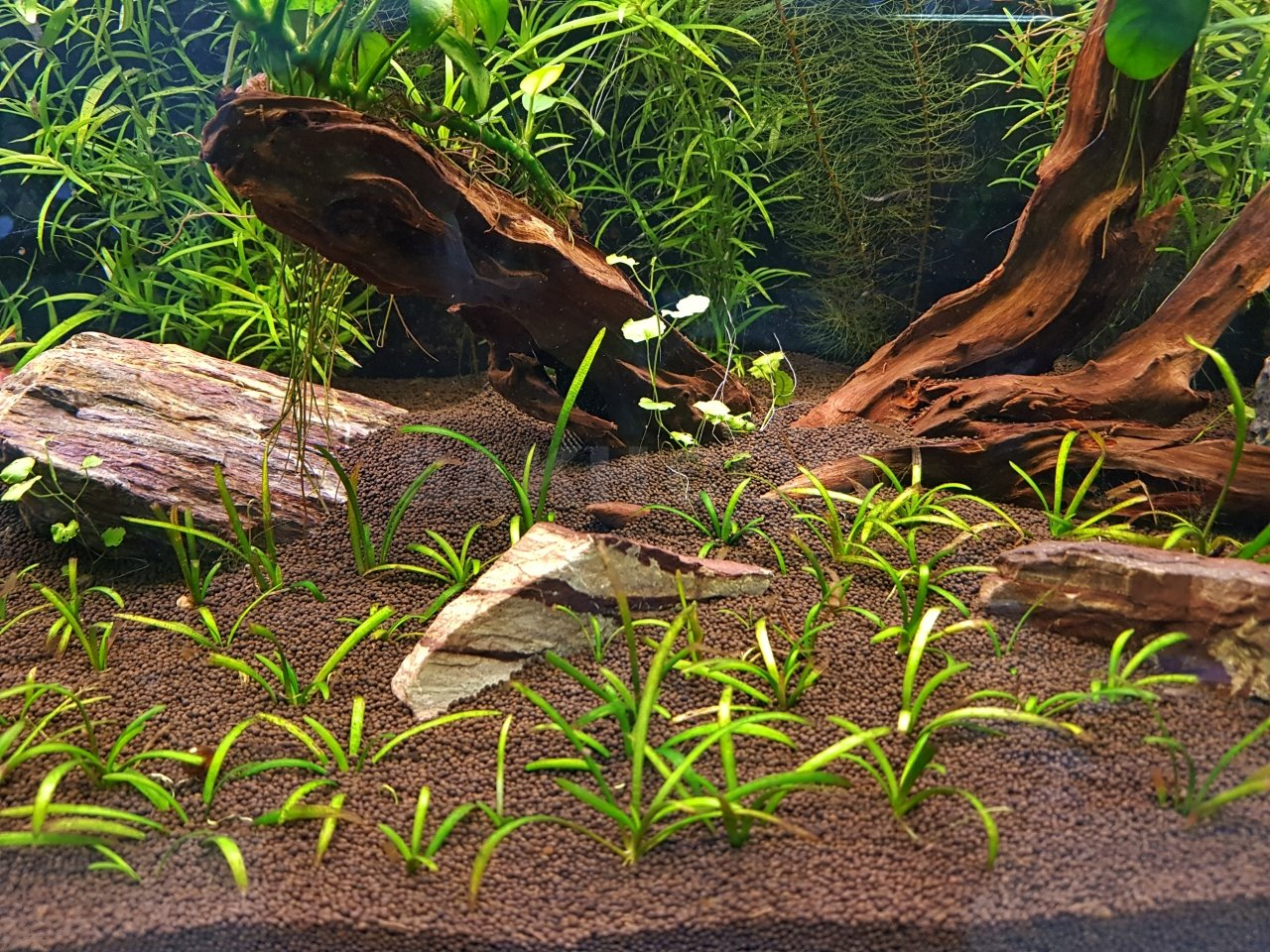 необязательно картинки из грунта для аквариума осуществляем