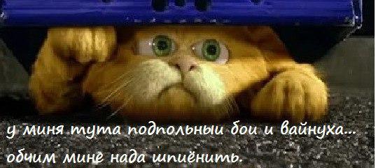 Блог Кота Моти  GgqaYeNsYkI